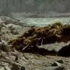 【アラスカ州】大自然に一人の青年が本当の自由を求める旅に出る