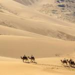 【モンゴル ゴビ砂漠】砂漠から不死鳥の如く脱出する生存者たち